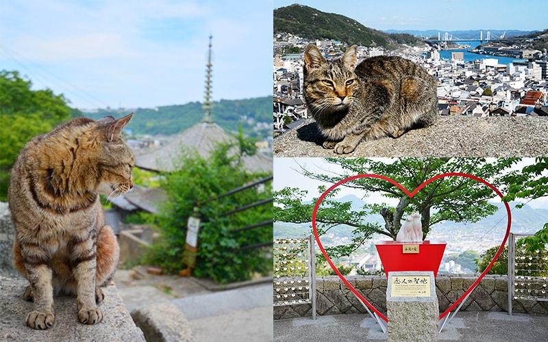 尾道にかくれる猫を探して歩く散歩道
